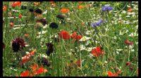 Tráiler 'El jardín del artista: impresionismo americano'