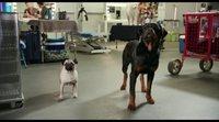 Tráiler en español 'Superagente canino'