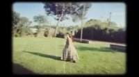 https://www.ecartelera.com/videos/clip-elisa-y-marcela-2/