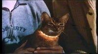 Tráiler español 'El gato que vino del espacio'