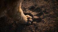 Teaser español 'El rey león'
