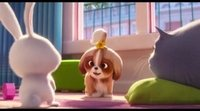 Tráiler Daisy 'Mascotas 2'