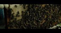 Tráiler oficial 'El secreto de las abejas'