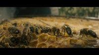 Clip #1 'El secreto de las abejas'