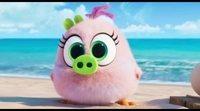 Clip #2 'Angry Birds 2: La película': La que has liado pollito