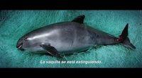 Tráiler subtitulado 'SOS: Mar de sombras'