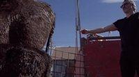 Joaquin Phoenix salva a una vaca y a su cría del matadero