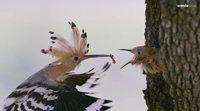 https://www.ecartelera.com/videos/trailer-2-dehesa-el-bosque-del-lince-iberico/