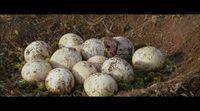 https://www.ecartelera.com/videos/clip-exclusivo-caminando-entre-dinosaurios/