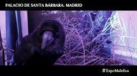 https://www.ecartelera.com/videos/spot-malefica-la-exposicion/