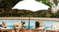 Trailer Un chihuahua en Beverly Hills