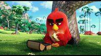 Teaser 'Angry Birds'