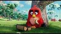 Teaser español 'Angry Birds'
