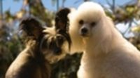 https://www.ecartelera.com/videos/trailer-hotel-perros-1/
