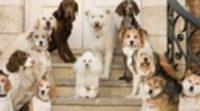 https://www.ecartelera.com/videos/trailer-hotel-perros-2/