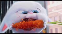 Teaser tráiler 'Mascotas' - Snowball