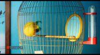 'Mascotas': Presentación Plumita
